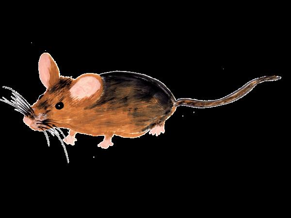 Maus - Aquarell - freigestellt