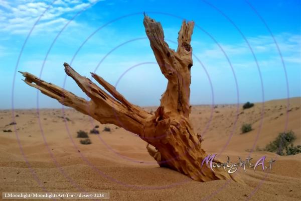 Wurzel im Wüstensand