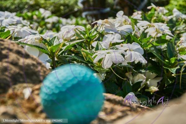 Minigolf - Ball liegt vor Blumen (Fokus)