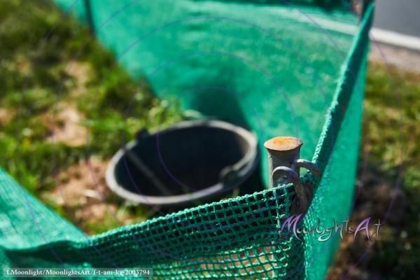 Krötenwanderung - Fangeimer am Schutzzaun