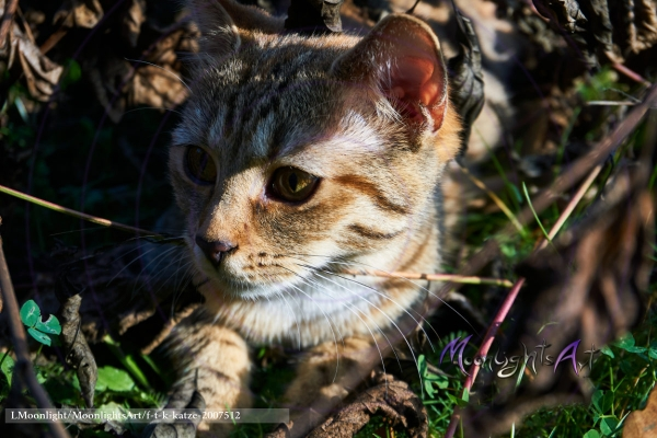 Haustier - Katze - getigert - versteckt sich zwischen trockenen Ästen
