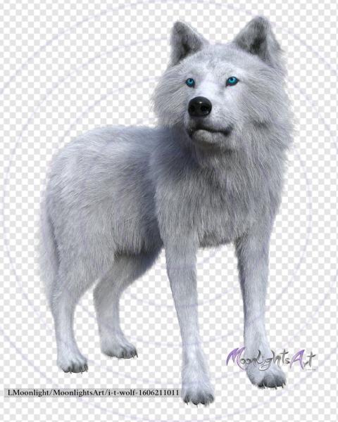 Wolf - Raubtier - weiß - 1 - freigestellt